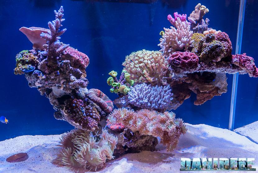 Rocciata e coralli allo stand Nyos