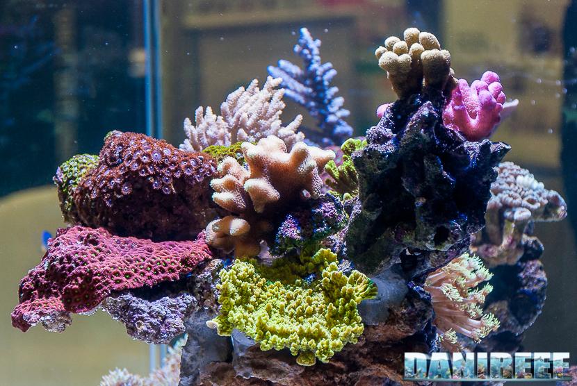 Rocciata e coralli acquario Nyos Opus