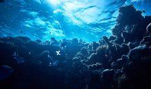 Scoperta una nuova zona oceanica, della barriera profonda, brulicante di nuove specie di pesci