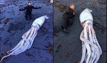 Il Kraken! Trovato un calamaro gigante su una spiaggia della Nuova Zelanda
