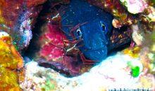 Pesci e gamberetti pulitori. Una complicità fatta di segnali e codici