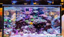 Un acquario marino spettacolare targato Neptune Systems al Macna