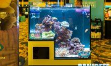 I bellissimi acquari di Innovative Marine al Macna con le loro soluzioni non convenzionali
