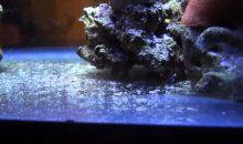 La gestione dei detriti in un acquario marino