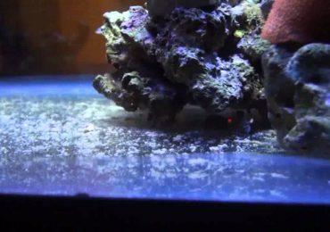 Detriti in acquario