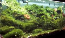 High levels of nitrates, phosphates and nutrients in aquarium but without measuring them