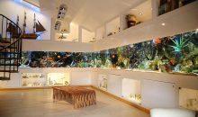 Avete 100.000 euro da spendere in un acquario? Eccolo qui!