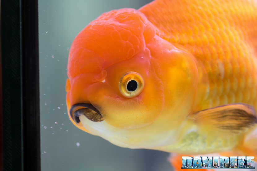 Goldfish Experience in mostra: petsfestival 2018