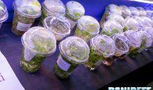 Piante in vitro, soluzione intelligente per il mercato acquariofilo