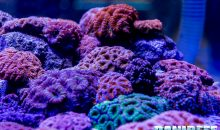 Tutti i coralli del PetsFestival 2018