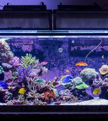 Siamo andati in California a vedere l'acquario marino di Terence Fugazzi (Apex)