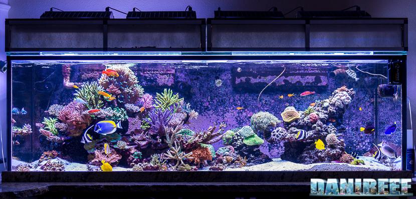 Acquario marino di Terence Fugazzi - Gilroy - California