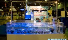 Coralli e pesci allo stand Easy Fish e Ruinemans Aquarium al Pet Expo e Show a Bologna