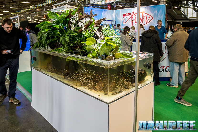 Acquario di acqua dolce in parte immerso in parte emerso presso lo stand Easy Fish al Pet Expo e Show 2018