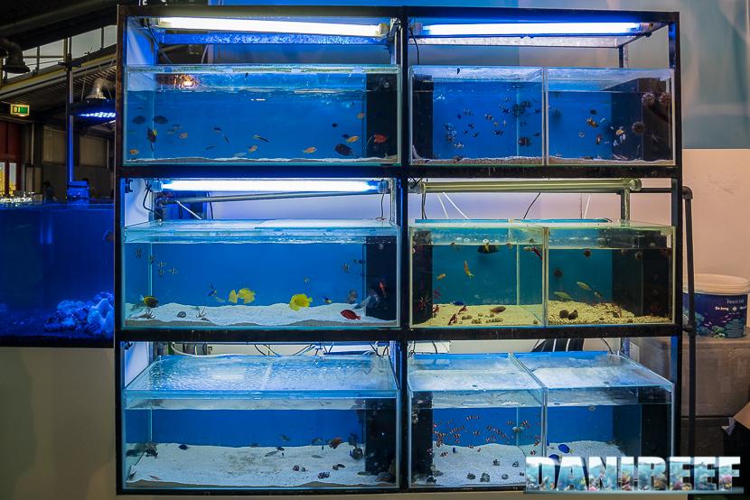 Batterie di pesci presso lo stand Easy Fish al Pet Expo e Show 2018