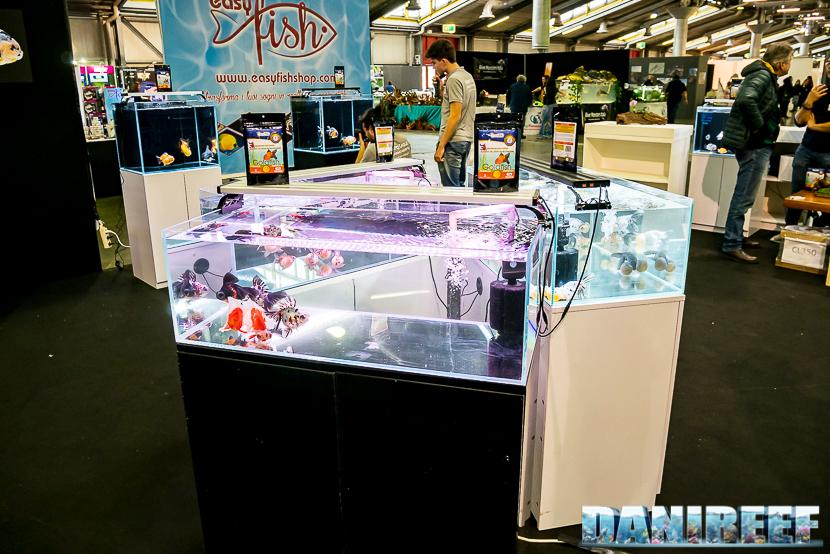 Le vasche basse del Goldfish show presso Royal Aquarium al Pet Expo e Show 2018 di Bologna
