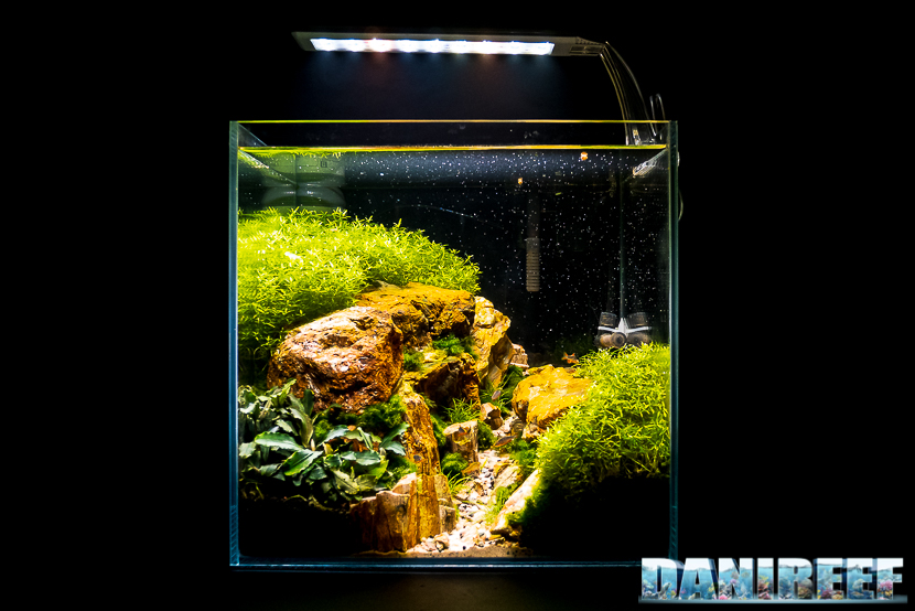 Mini Aquascaping in mostra: Alessandro mascolo al Pet Expo & Show 2018 Bologna
