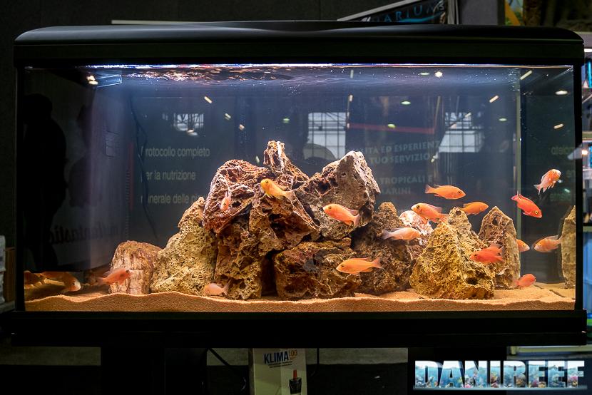 Acquario di acqua dolce presso lo stand AquariumLab al Pet Expo & Show a Bologna