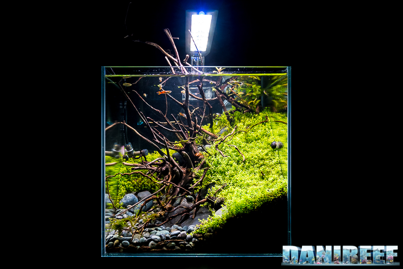 Mini Aquascaping in mostra: Enrico Fortuna al Pet Expo & Show 2018 Bologna