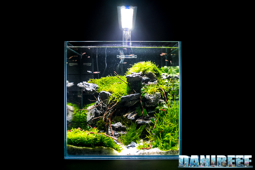 Mini Aquascaping in mostra: Fabio Lorusso al Pet Expo & Show 2018 Bologna