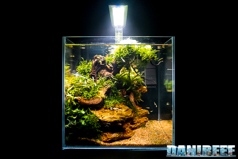 Mini Aquascaping in mostra: Giacomo Guarraci al Pet Expo & Show 2018 Bologna