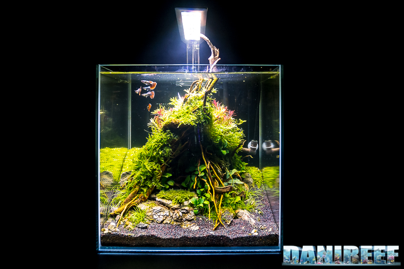 Mini Aquascaping in mostra: Giuseppe Nisi al Pet Expo & Show 2018 Bologna