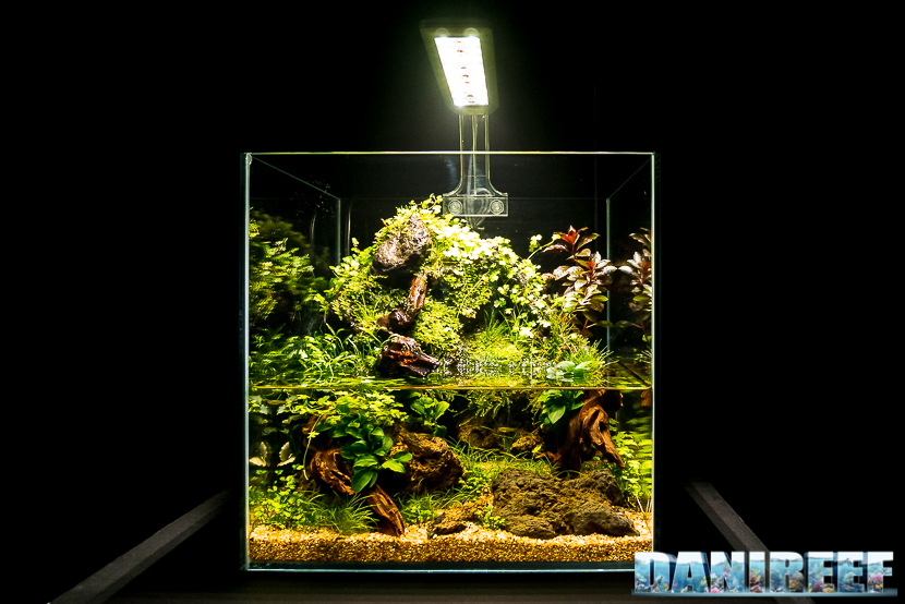 Mini Aquascaping in mostra: Roberto Bielli al Pet Expo & Show 2018 Bologna