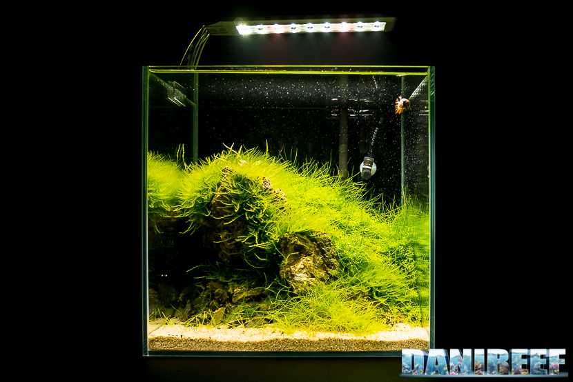Mini Aquascaping in mostra: Samuele Gamberini al Pet Expo & Show 2018 Bologna