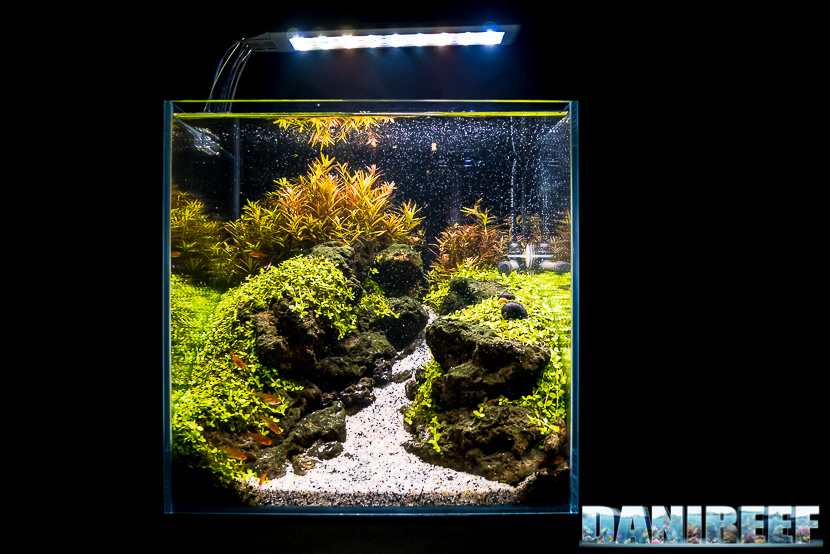 Mini Aquascaping in mostra: Simone Castagnoli al Pet Expo & Show 2018 Bologna