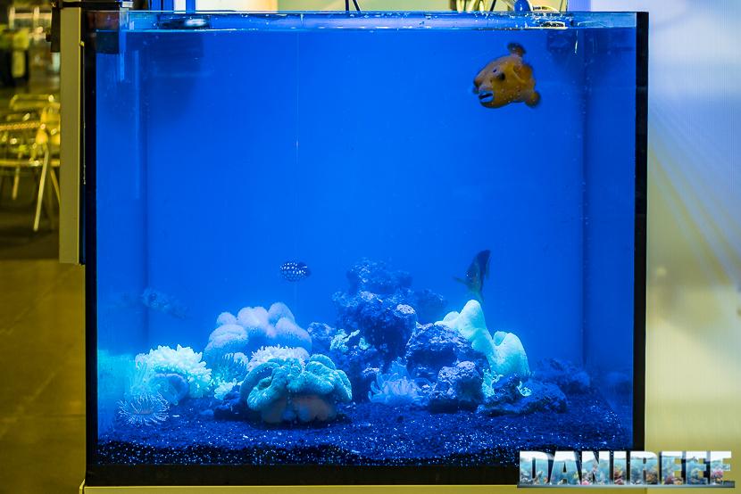 Anemoni e pesci particolari presso lo stand Easy Fish al Pet Expo e Show 2018