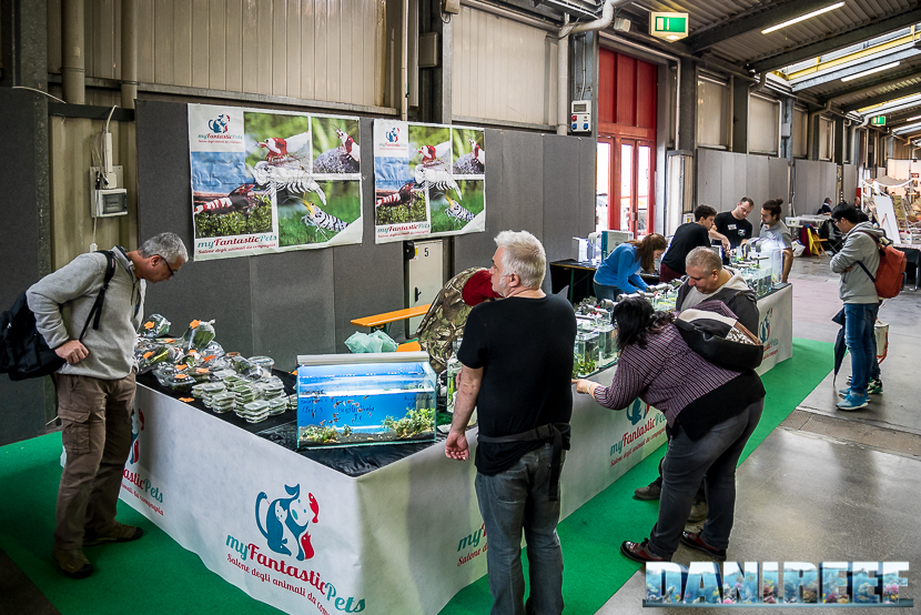 Caridine e Neocaridine presso lo stand organizzato dal gruppo Shrimps Italy e soprattutto da Luca Alvisi e Luca Giacomelli