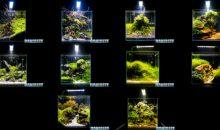 Gli spettacolari Aquascaping degli amici di ITAU al Pet Expo e Show