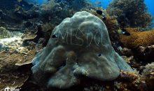 Scrivere sui coralli – l'ultima frontiera della stupidità umana con video
