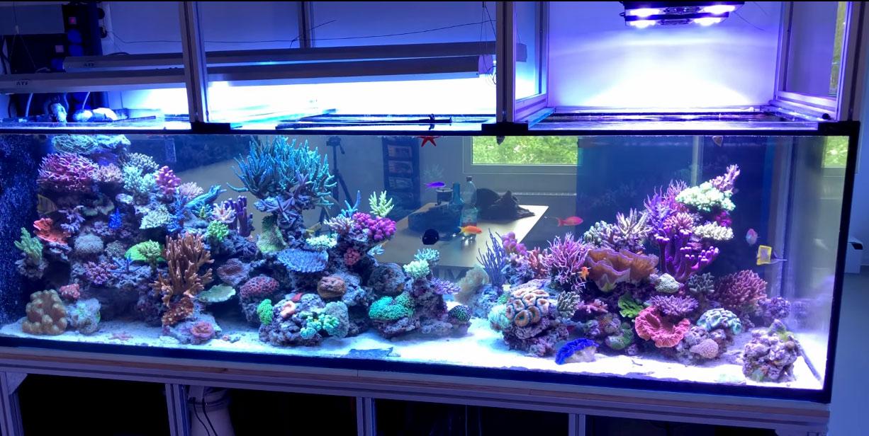 L'acquario marino di whitecorals
