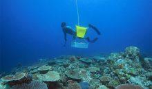 Ecco perché i coralli che si pescano in Australia valgono tutti i soldi richiesti