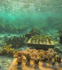 I coralli possono sopravvivere solo grazie alla biodiversità, scopriamo il perché