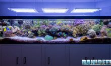 1000 liters of the marine aquarium of the month by Carlo Mondaini with video and pictures