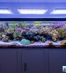 1000 litri di acquario marino del mese di Carlo Mondaini con video e foto