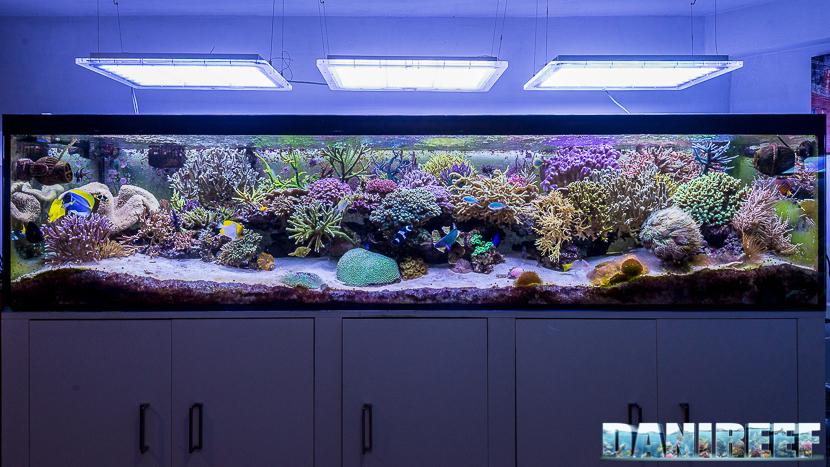 L'acquario marino da 1000 litri di Carlo Mondaini