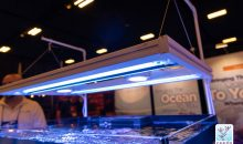 Aquaticlife presenta una plafoniera ibrida T5-LED molto particolare