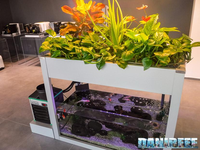 Sistema acquaponico per la crescita sostenibile di piante e pesci all'ingresso di TECO