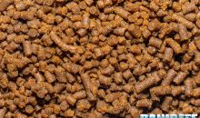 LPS Coral Pellets – from Vitalis a food for hard corals with large polyps