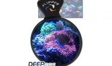 Come osservare i coralli da molto vicino con il DeepSee Magnified Viewer