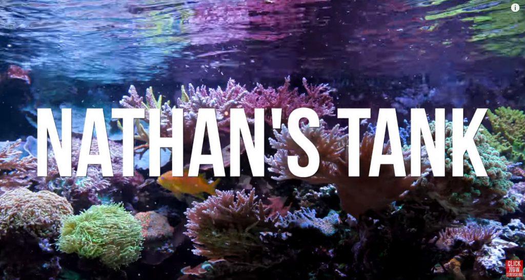 L'acquario marino di Nathan