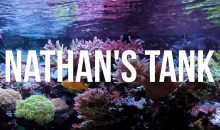 L'acquario marino da 740 litri di Nathan con LED di oltre otto anni fa [video]