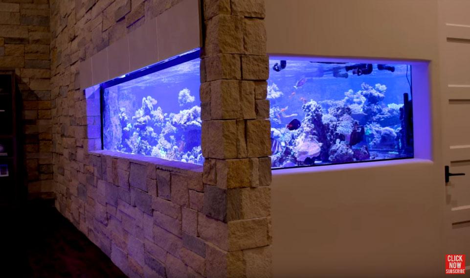 L'acquario di Ryan da 3700 litri