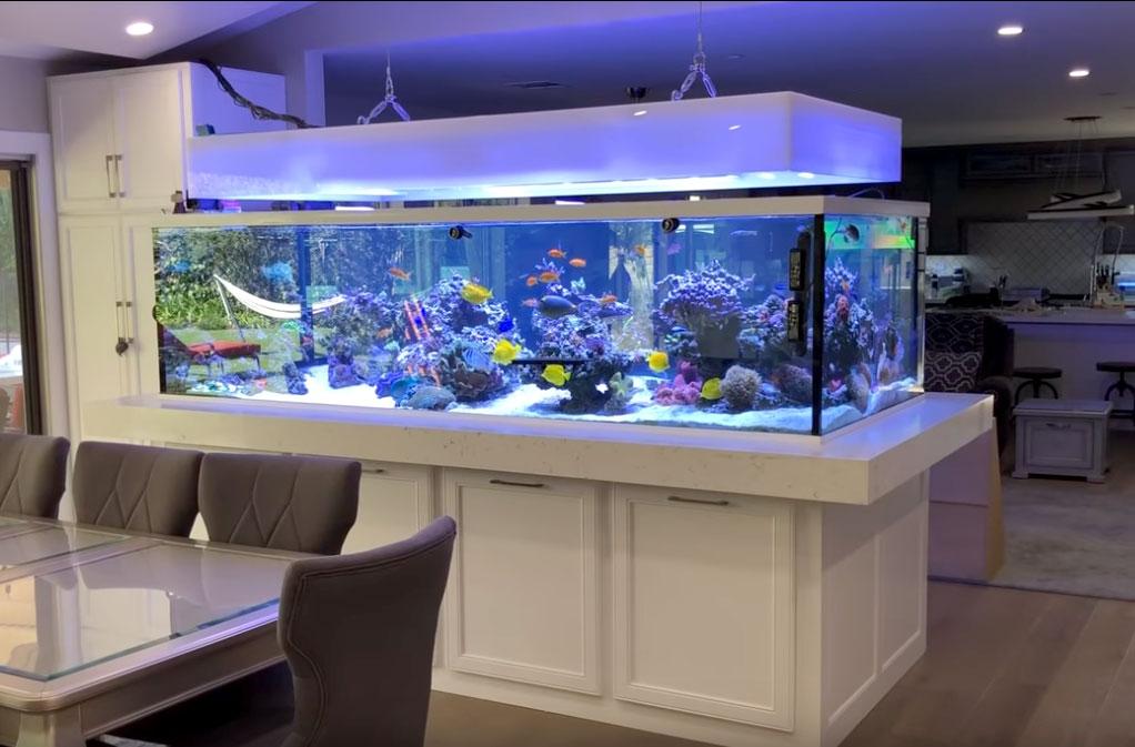 Rainbow Reef - un acquario marino da 2.500 litri
