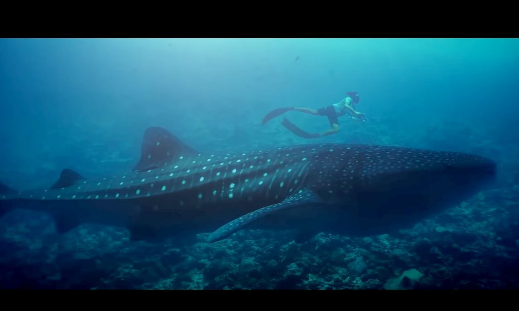 "Documentario cortometraggio ""The Reef, Maldives"" dal programma MWSRP"