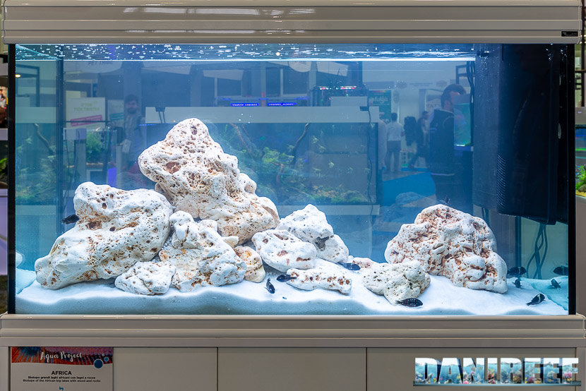 Acquario di ciclidi africani in mostra all'Acqua Project 2019 dello Zoomark