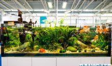 L'inserimento dei pesci nell'acquario d'acqua dolce